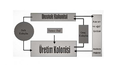 Photo of Koloni Destek Sistemi