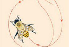 Photo of Bal Arılarında İletişim